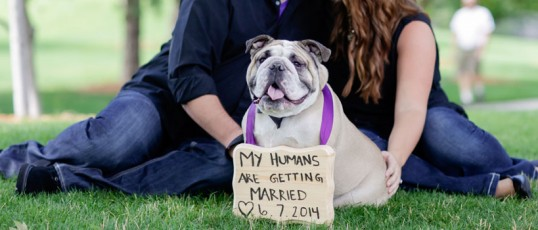 How to incorporate man's best friend into your wedding